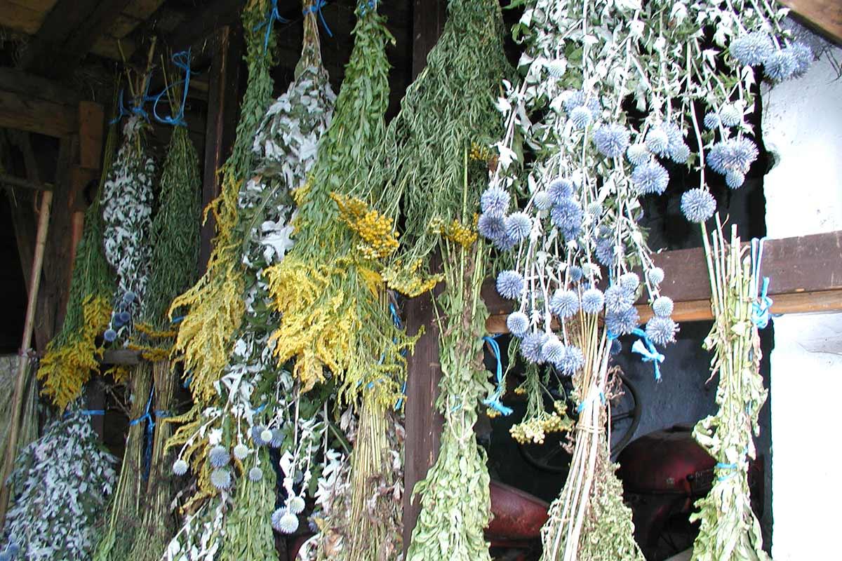 Kräuterbuschen am Prinzenhof