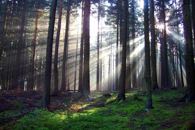 Waldstimmung, Kraftarena Groß Gerungs