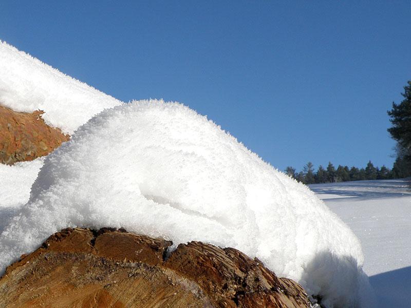 Winterweiß am Prinzenhof